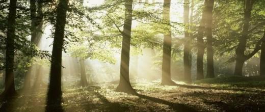 лес_на_сайт