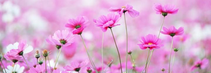 flowers-wallpaper-1366x768