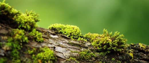 moss-widescreen-best-desktop-images-1080P-wallpaper
